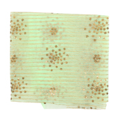Green Net Fabric With Golden Embroidery-60839